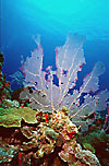 St Kitts Coral Reef